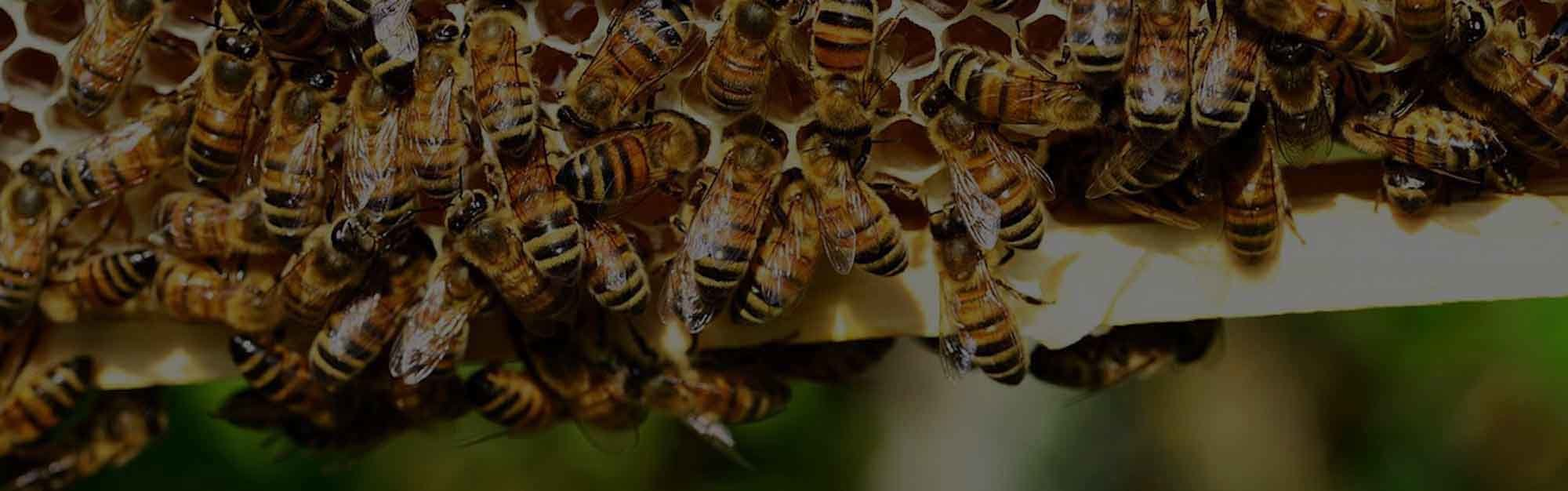 DELPA-Bee-Removal-Experts-in-Houston-Texas-v002-3