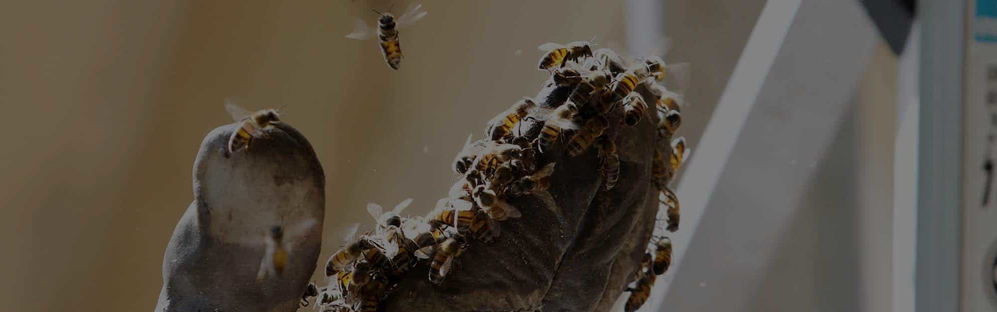 DELPA-Bee-Removal-Experts-in-Houston-Texas-v005