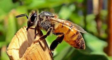 DELPA-Bee-Removal-Experts-in-Houston-Texas-Bee-Hive-Prevention-Service-v001