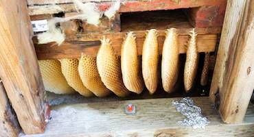 DELPA-Bee-Removal-Experts-in-Houston-Texas-Honey-Comb-Removal-Service-v001