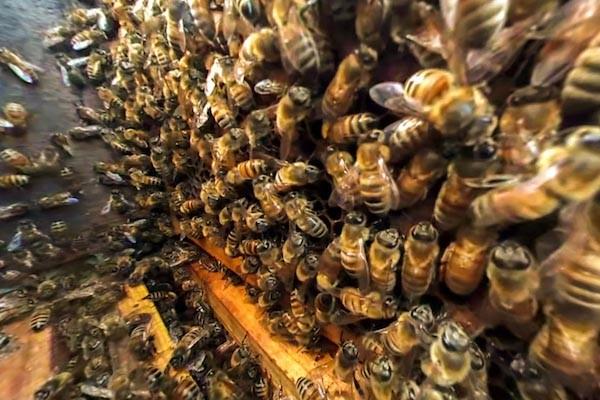 DELPA-Bee-Removal-Experts-in-Houston-Texas_v001-2