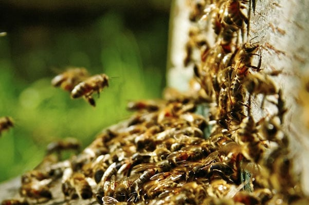 Bee Removal for Pest Control Companies in Houston