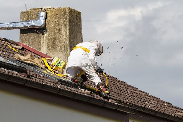 Bee Removal for Roof Repair Companies v001